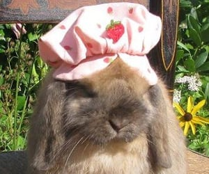 bunny, cute, and cottagecore image