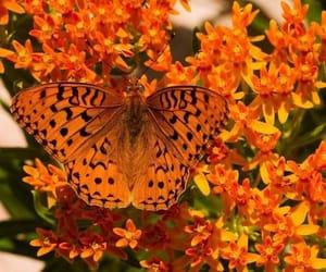 бабочка, цветы, and оранжевый image