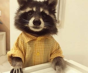 Dress Shirt, pets in clothes, and raccoon image
