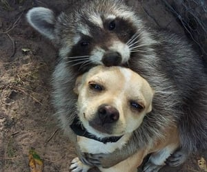 dog, animal, and friendship image