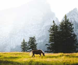 horse, photography, and trees image