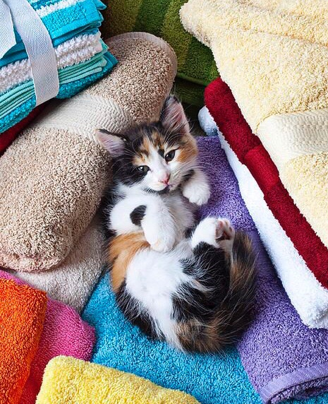 animals, cat, and chilling image
