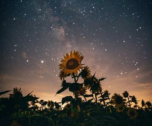 astronomy, bloom, and blossom image