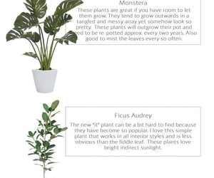 aesthetic, guide, and plants image