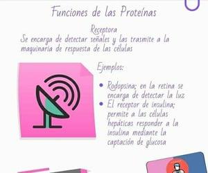 proteinas, estudiante aséptico, and apuntes medicina image