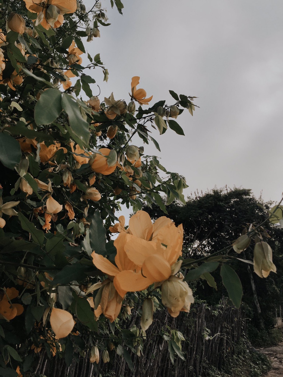 florish, aesthetic, and bloom image