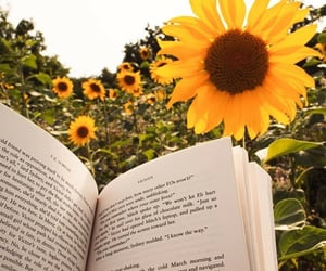 books and sunflower image