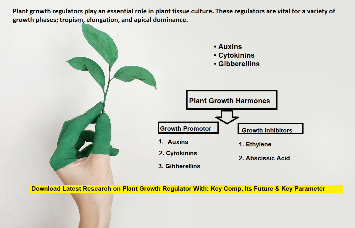 agriculture, plant, and article image