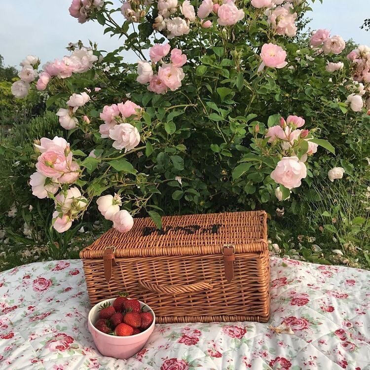 flowers, picnic, and food image