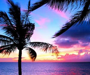 exotic, tropical, and tropical wallpaper image
