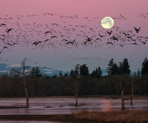 nature, moon, and bird image