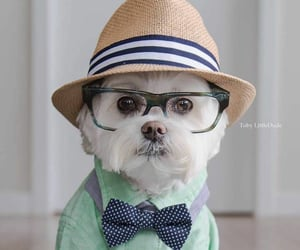 bowtie, classic, and hat image