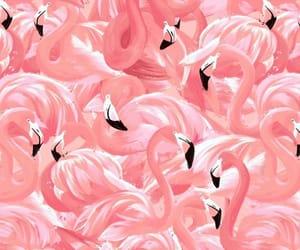 art, background, and flamingo image