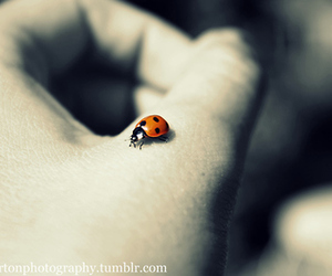 hand, insect, and ladybird image
