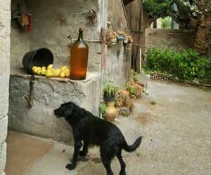 dogs, garden, and holidays image
