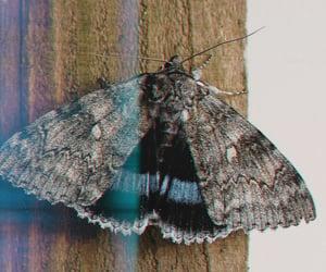 aesthetics, kawaii, and moth image