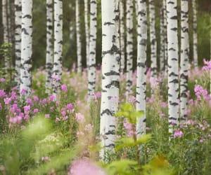birch, nature, and photo image