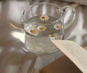 book, flower, and morning image