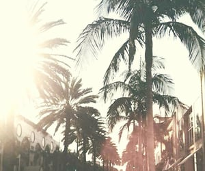 alternative, grunge, and palm tree image