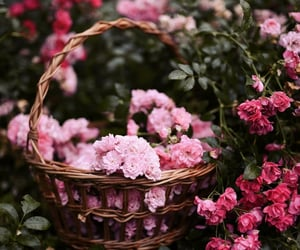 beauty, flowers, and pink image