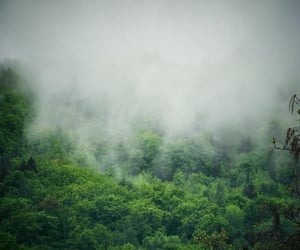 after rain, beautiful, and fog image