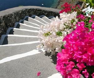 coastline, flowers, and ocean image