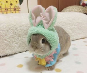 bunny, cute, and aesthetic image
