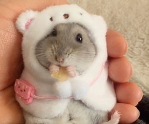 animal, hamster, and cute image