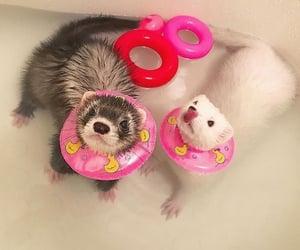 baby, bathtub, and ferret image