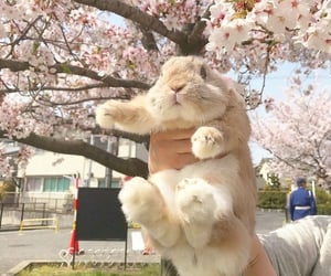 rabbit, aesthetic, and animals image