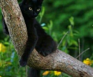 animals, black cat, and cat image