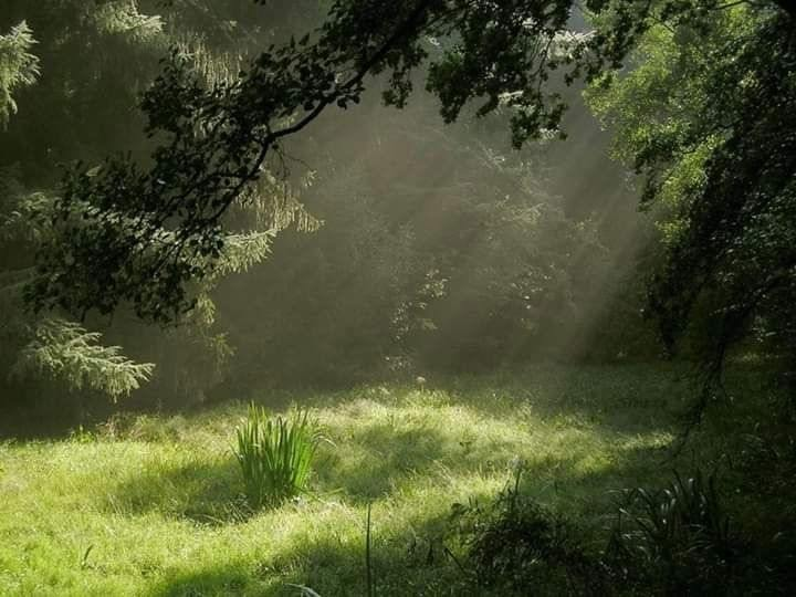 nature, green, and aesthetic image