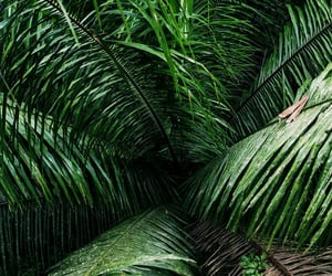 green, jungle, and fronds image
