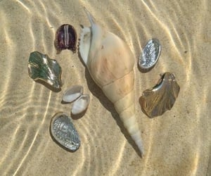 water, shell, and beach image