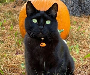 just peachy — horrorandhalloween: Ledges the cat