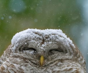 owl, photography, and snow image