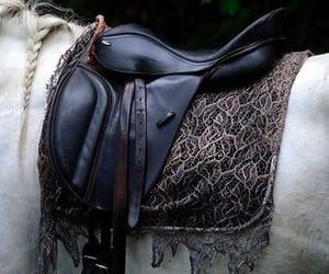 horse, julia quinn, and michael image