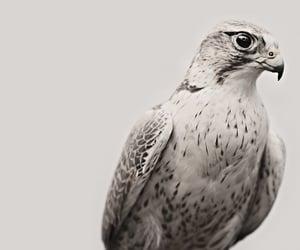book, books, and eagle image