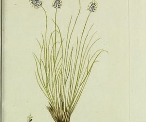 fast, plants, and pictorial works image