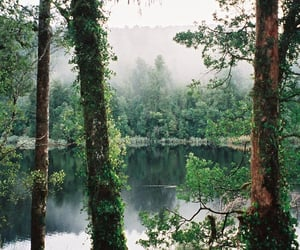 nature, tree, and water image