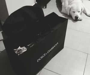 birthday, dog, and dolce and gabbana image