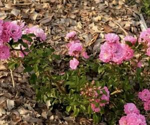 flowers, Клубника, and природа image