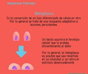 apuntes medicina, estudiante aséptico, and repasemos patología image