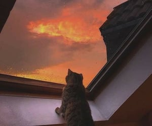 cat, sky, and sunset image
