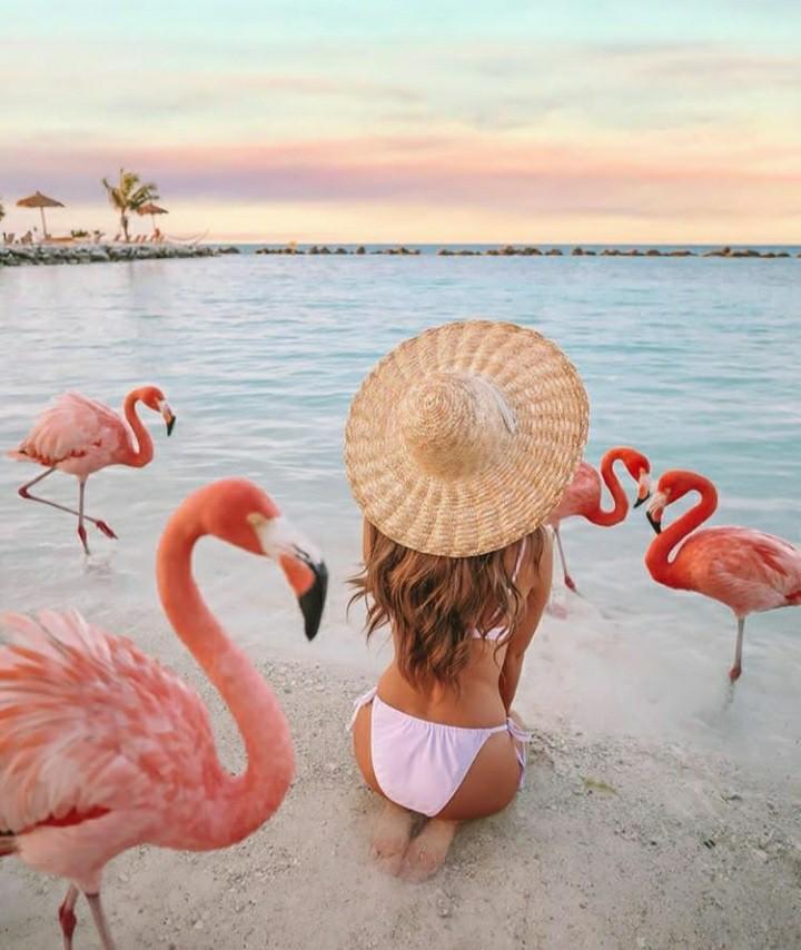 flamingo, summer, and beach image