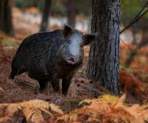 autumn, woods, and animal image