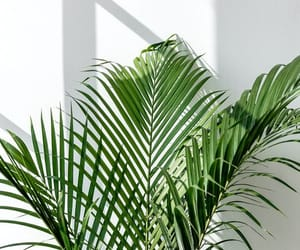 art, green, and plant image