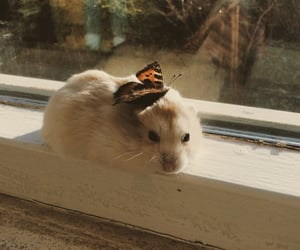 animal, butterfly, and cute image
