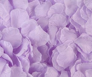 aesthetic, flower, and purple image