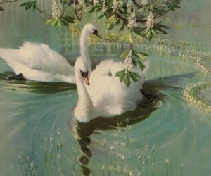 Swan, aesthetic, and animal image